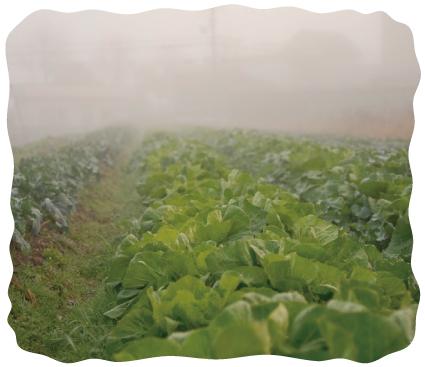 暖差のある三田の気候と武庫川が育んだ肥沃な大地